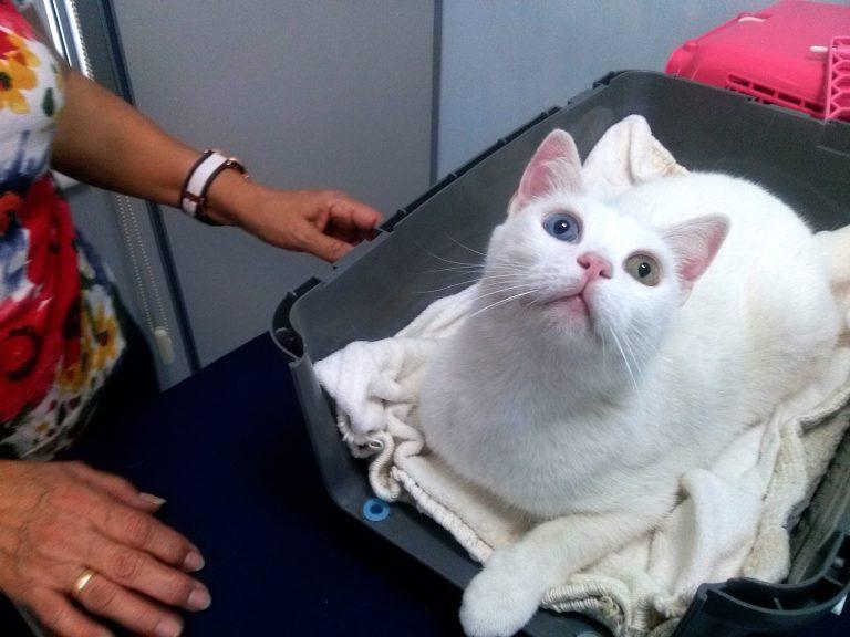 Gato blanco cuadrada